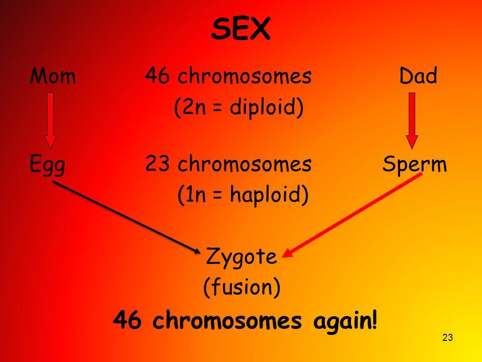 SEX 46 chromosomes again! Mom 46 chromosomes Dad (2n = diploid)