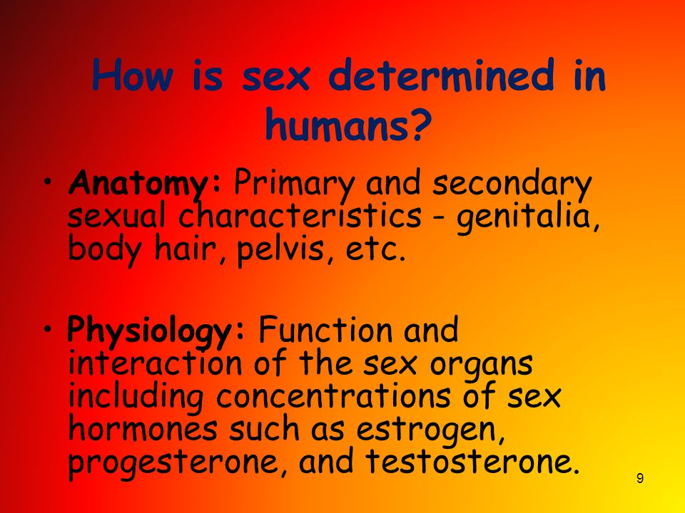 How is sex determined in humans