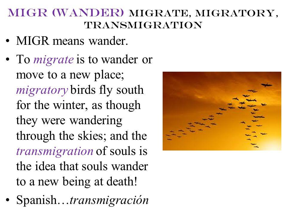 migr (wander) migrate, migratory, transmigration