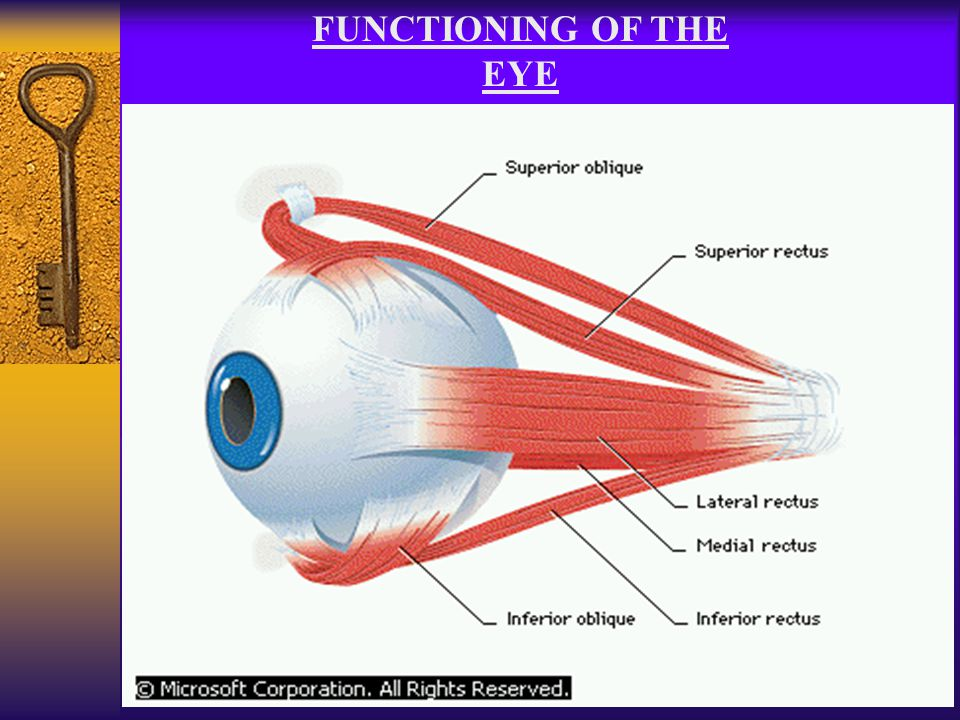 FUNCTIONING OF THE EYE