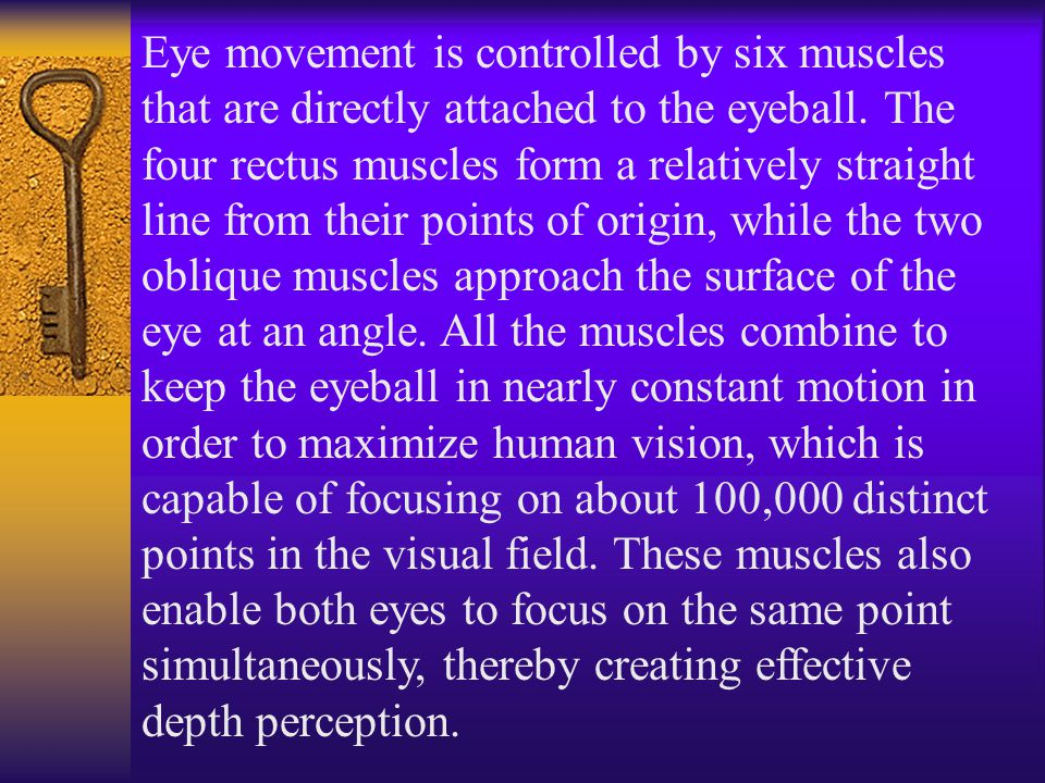Eye movement is controlled by six muscles that are directly attached to the eyeball.