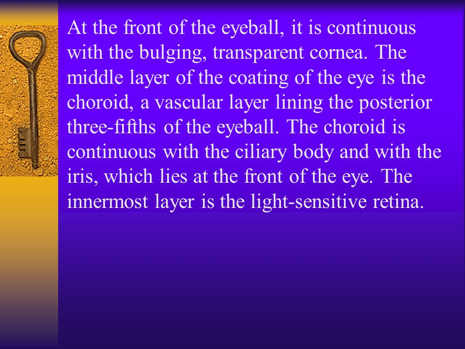 At the front of the eyeball, it is continuous with the bulging, transparent cornea.