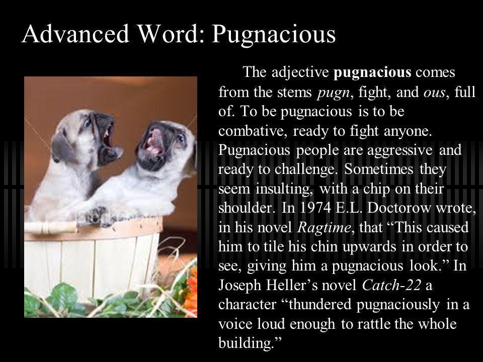 Advanced Word: Pugnacious