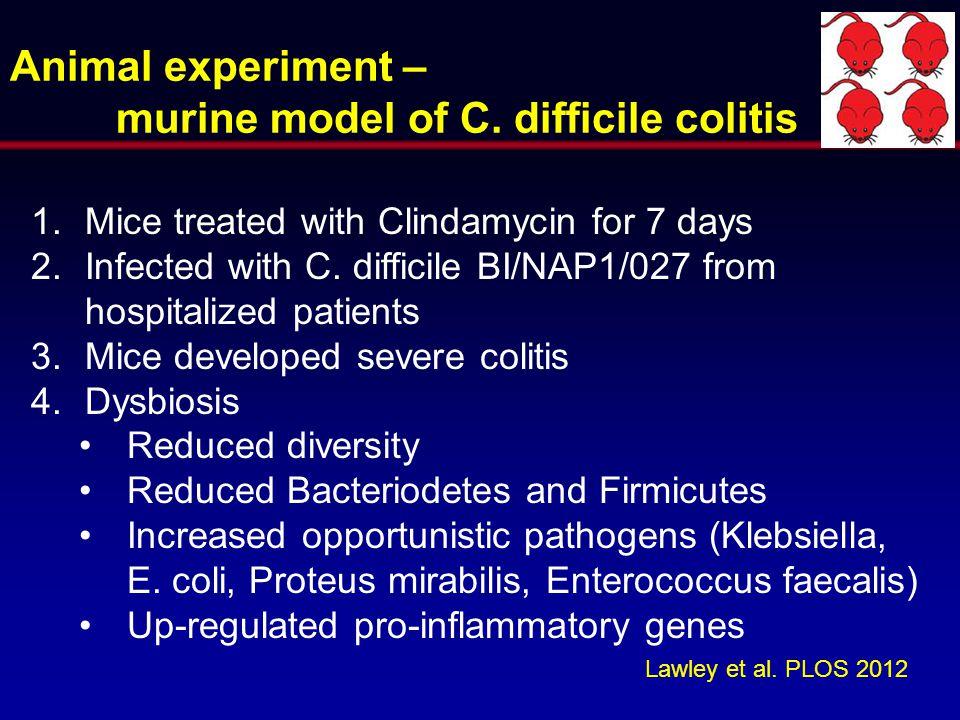murine model of C. difficile colitis