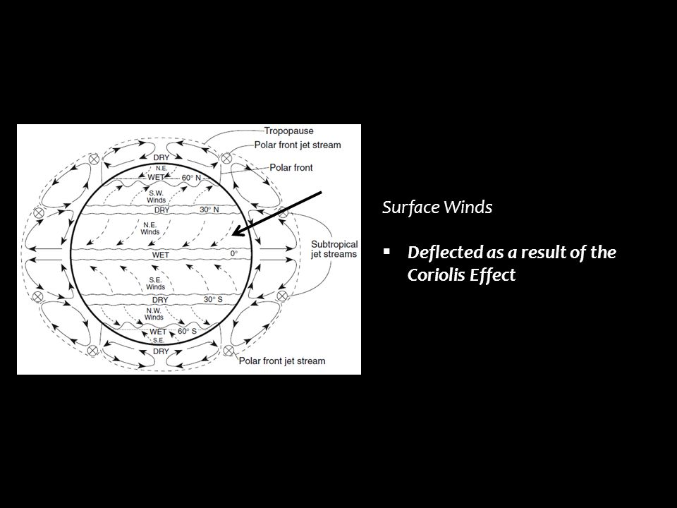 Surface Winds Deflected as a result of the Coriolis Effect