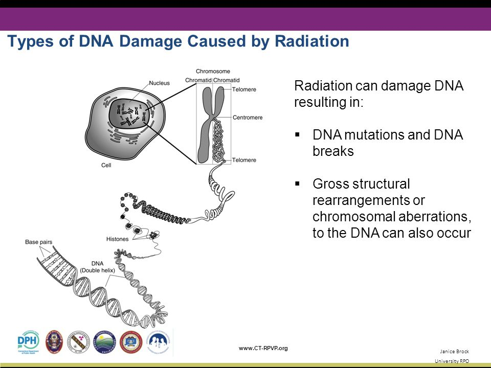 Types of DNA Damage Caused by Radiation