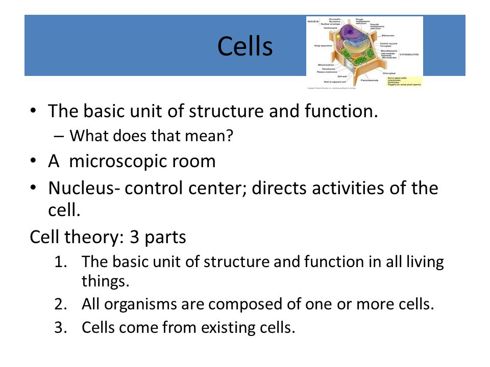 Cells The basic unit of structure and function. A microscopic room