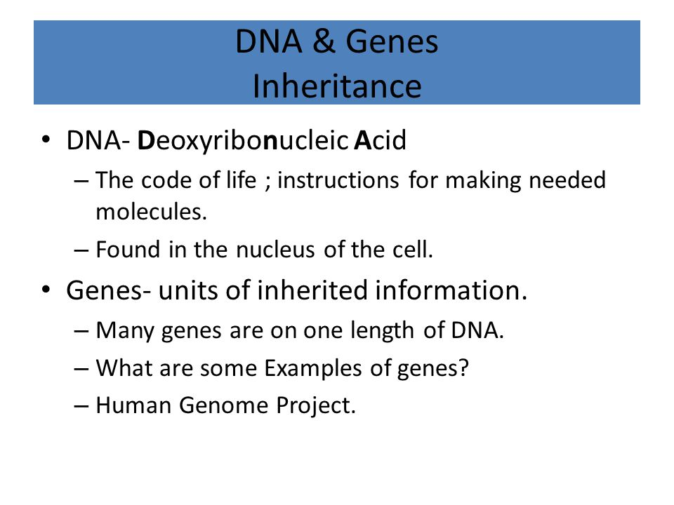 DNA & Genes Inheritance