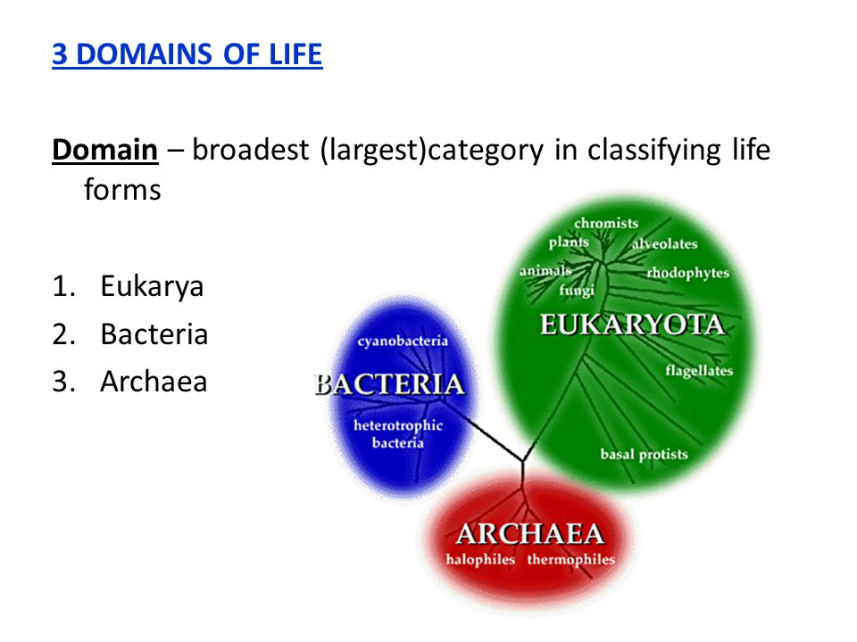 3 DOMAINS OF LIFE Domain – broadest (largest)category in classifying life forms. Eukarya. Bacteria.