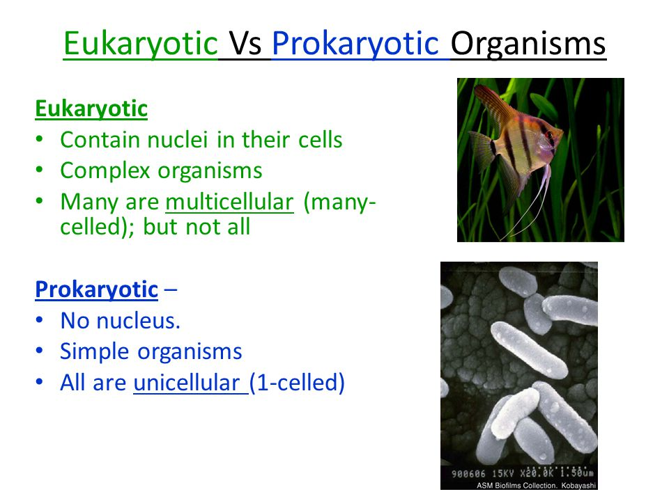 Eukaryotic Vs Prokaryotic Organisms