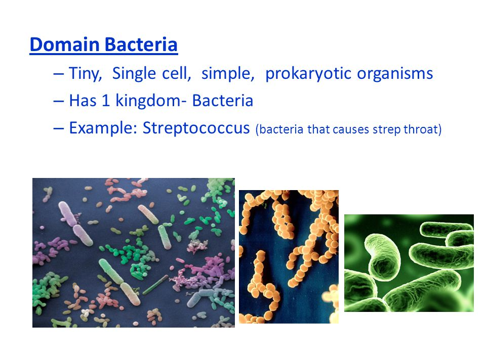 Domain Bacteria Tiny, Single cell, simple, prokaryotic organisms