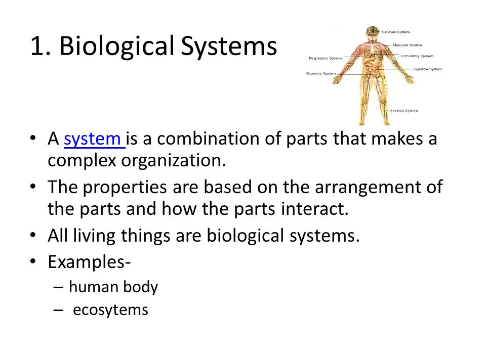 1. Biological Systems A system is a combination of parts that makes a complex organization.