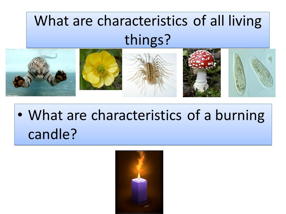 What are characteristics of all living things