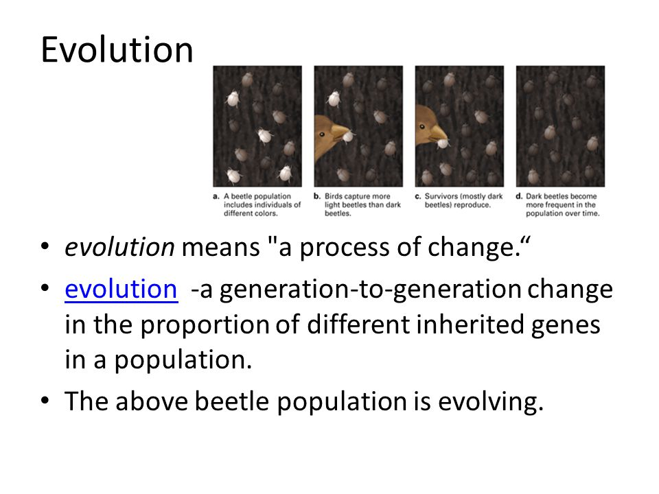 Evolution evolution means a process of change.