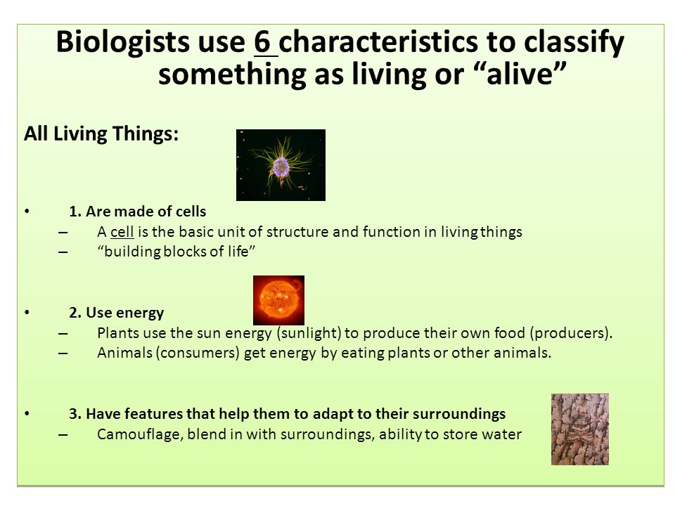 Biologists use 6 characteristics to classify something as living or alive