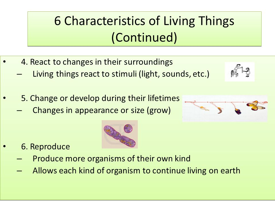 6 Characteristics of Living Things (Continued)