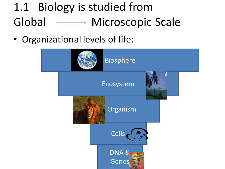 1.1 Biology is studied from Global Microscopic Scale