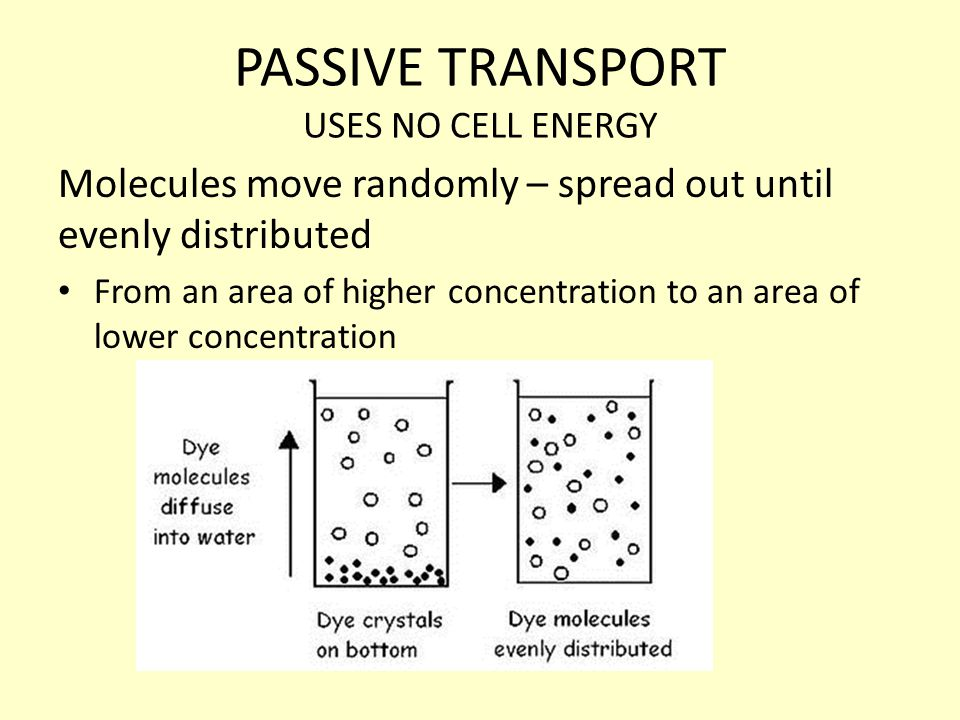 PASSIVE TRANSPORT USES NO CELL ENERGY