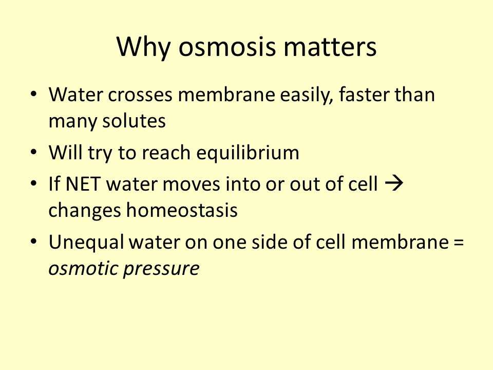 Why osmosis matters Water crosses membrane easily, faster than many solutes. Will try to reach equilibrium.