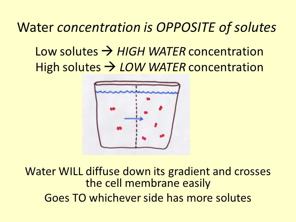 Water concentration is OPPOSITE of solutes
