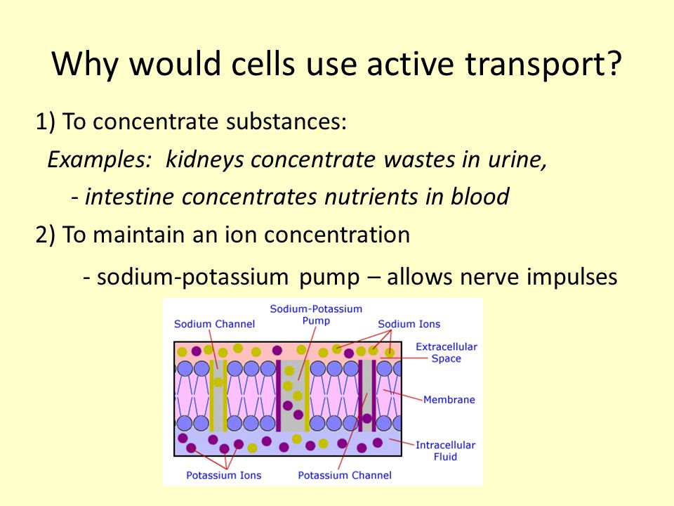 Why would cells use active transport