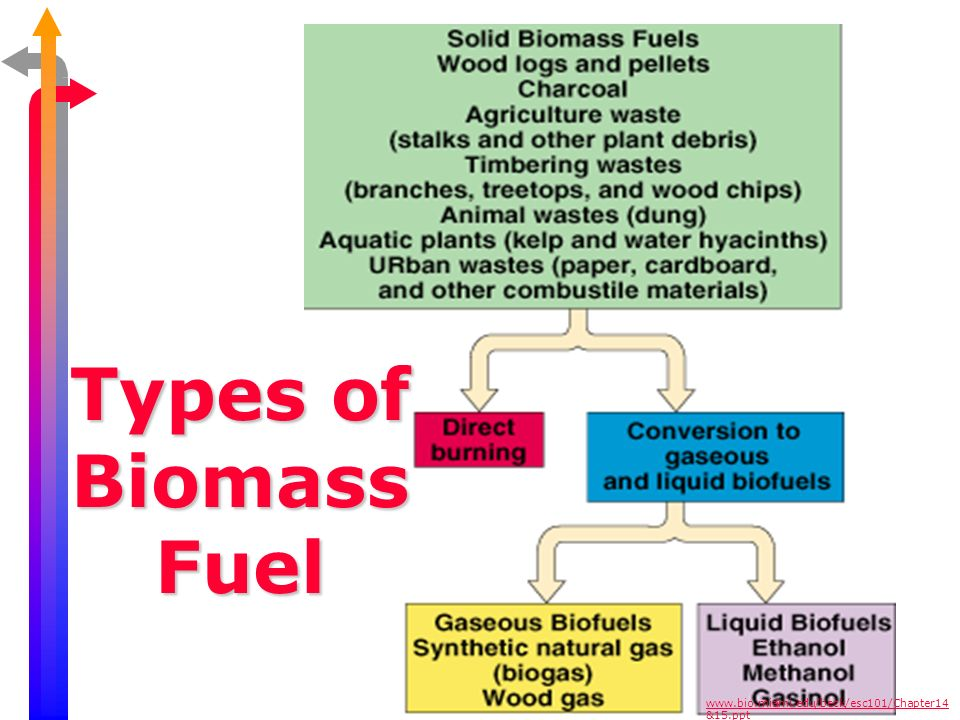 Types of Biomass Fuel www.bio.miami.edu/beck/esc101/Chapter14 &15.ppt