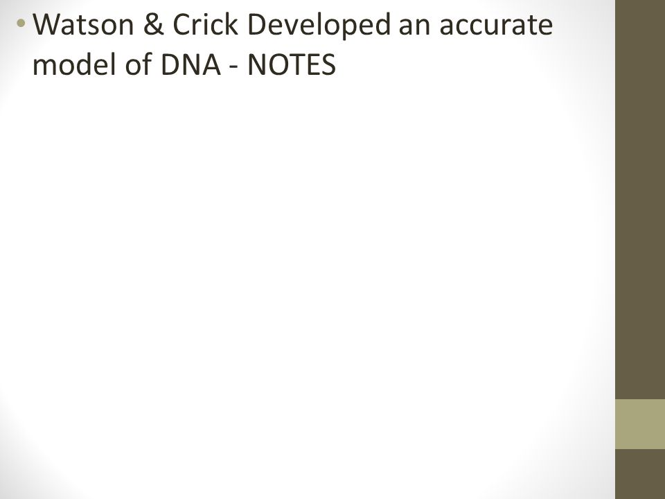 Watson & Crick Developed an accurate model of DNA - NOTES