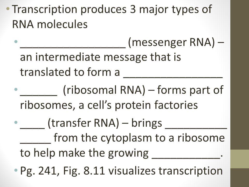 Transcription produces 3 major types of RNA molecules