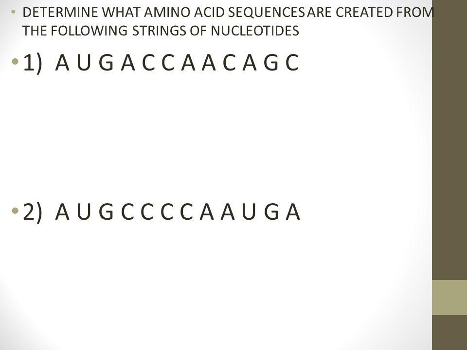 1) A U G A C C A A C A G C 2) A U G C C C C A A U G A