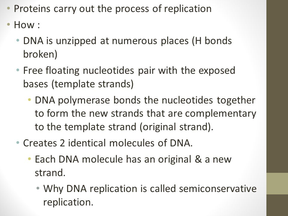 Proteins carry out the process of replication