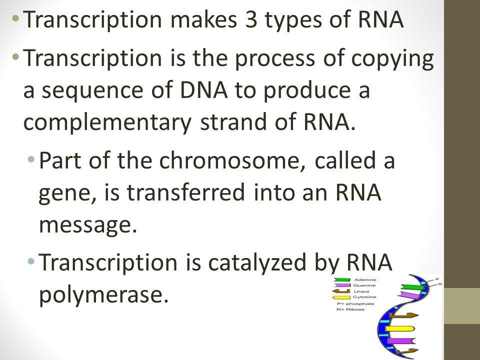 Transcription makes 3 types of RNA