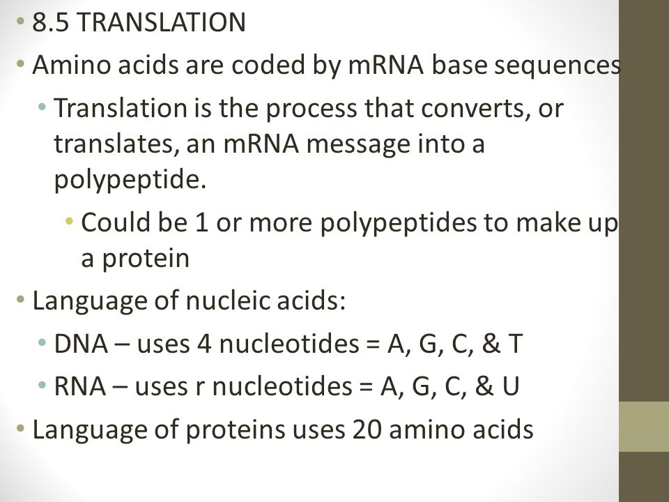 8.5 TRANSLATION Amino acids are coded by mRNA base sequences.