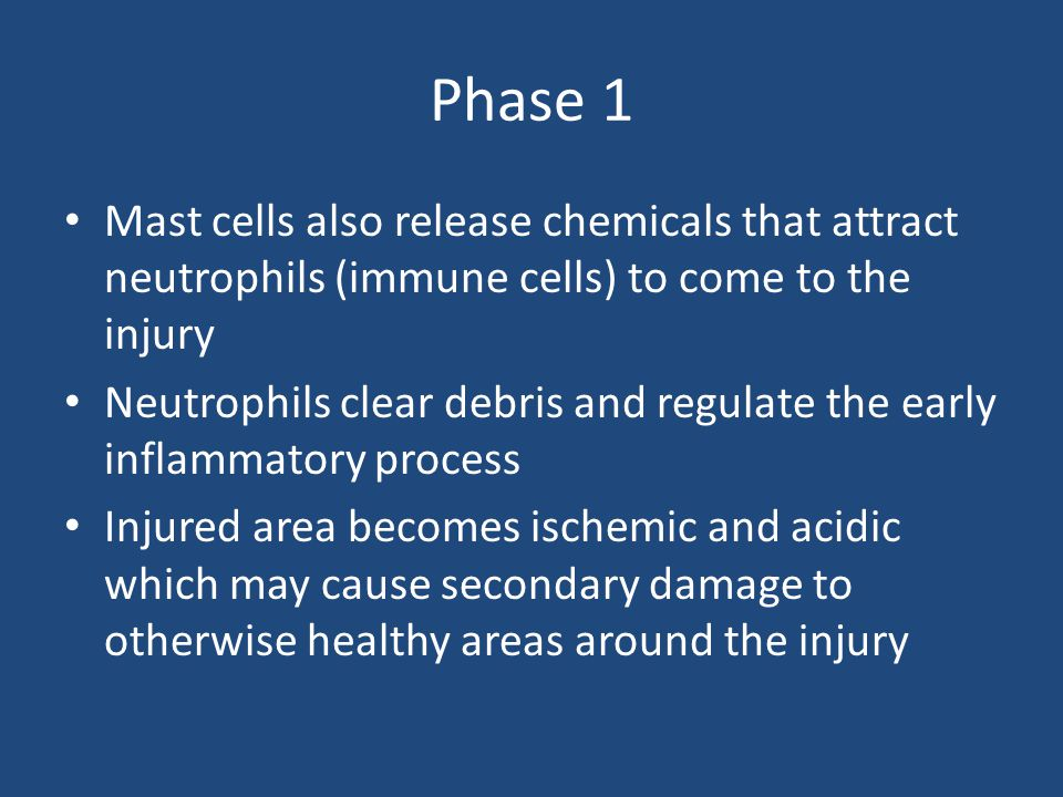 Phase 1 Mast cells also release chemicals that attract neutrophils (immune cells) to come to the injury.