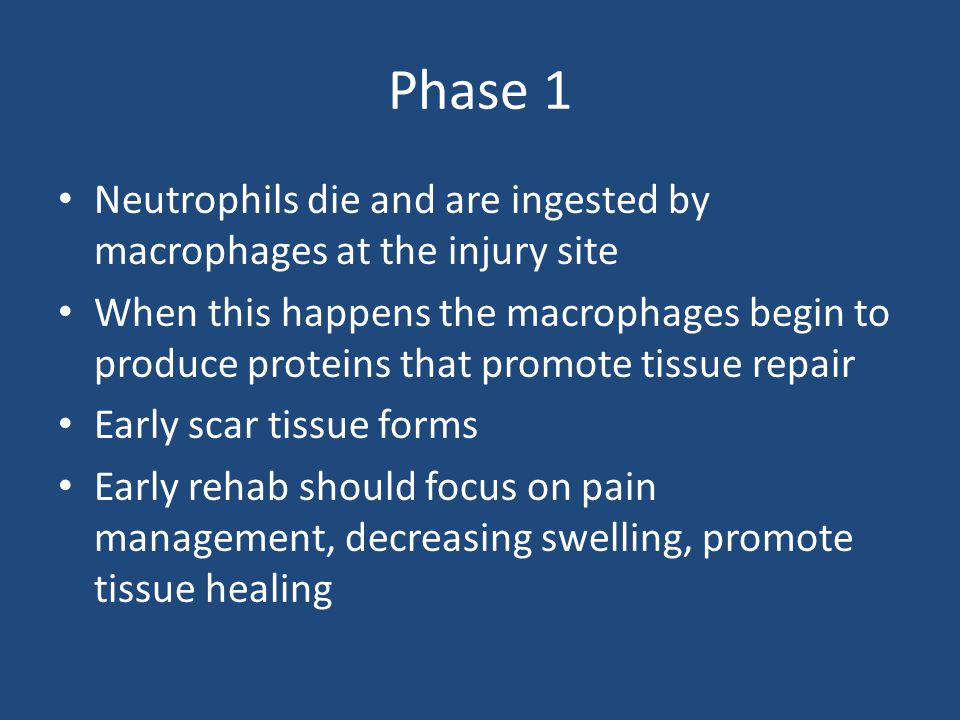 Phase 1 Neutrophils die and are ingested by macrophages at the injury site.