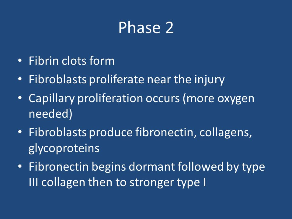 Phase 2 Fibrin clots form Fibroblasts proliferate near the injury