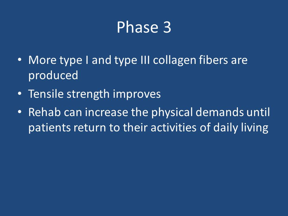 Phase 3 More type I and type III collagen fibers are produced