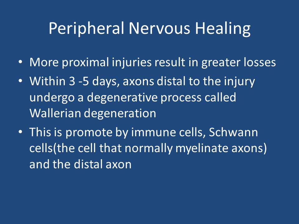 Peripheral Nervous Healing
