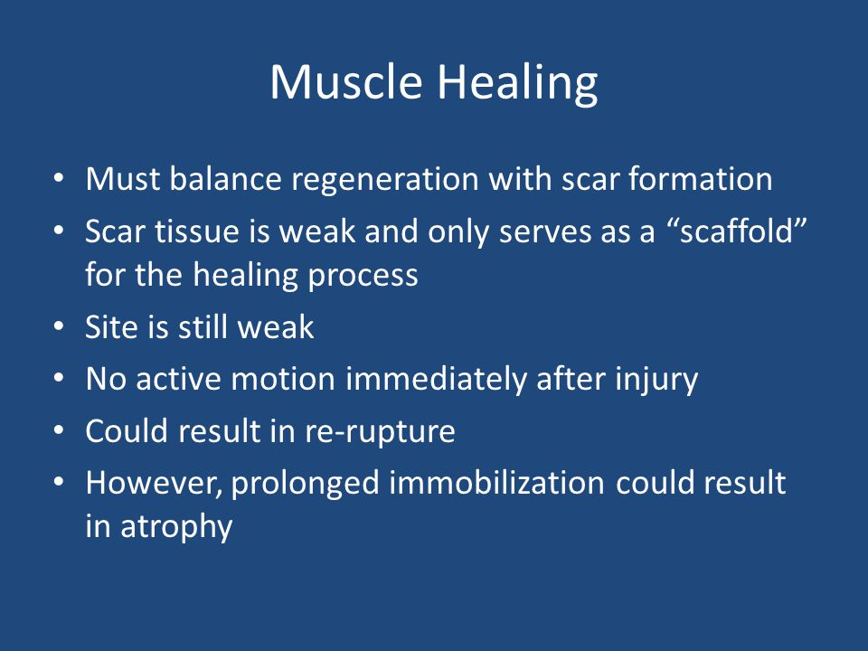 Muscle Healing Must balance regeneration with scar formation