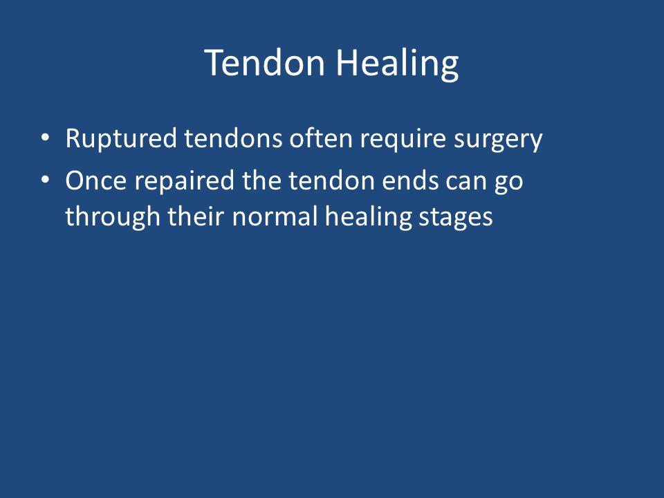 Tendon Healing Ruptured tendons often require surgery