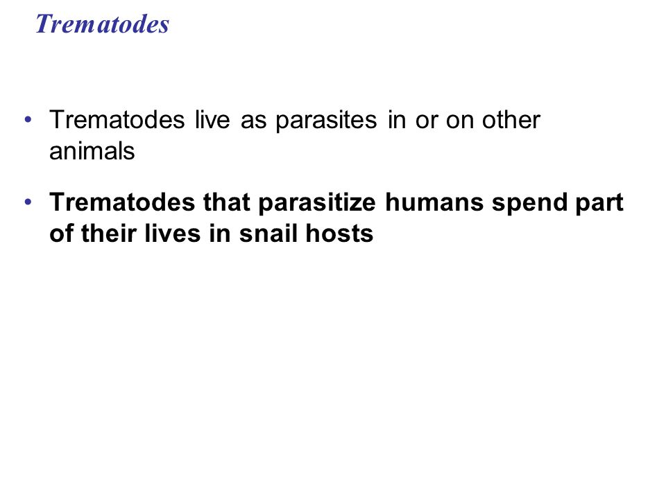 Trematodes Trematodes live as parasites in or on other animals