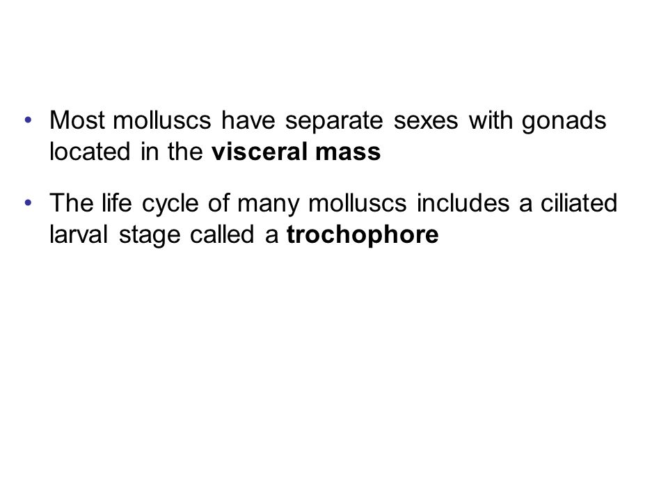 Most molluscs have separate sexes with gonads located in the visceral mass