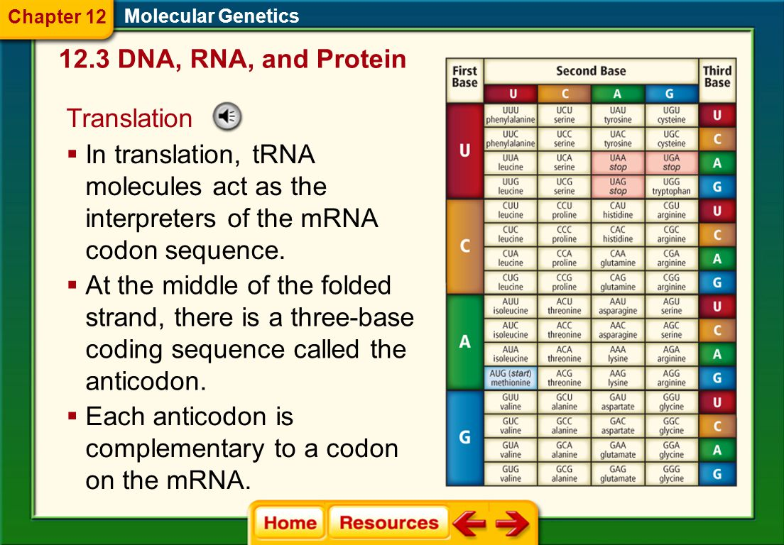 Each anticodon is complementary to a codon on the mRNA.