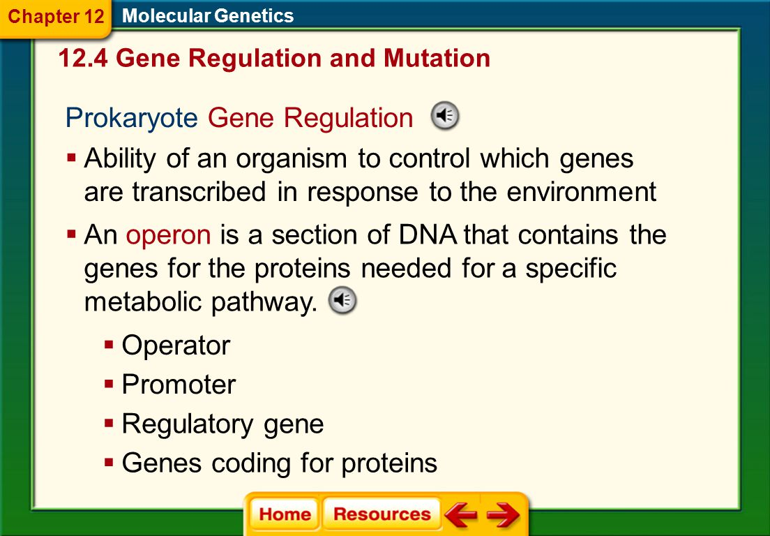 Prokaryote Gene Regulation