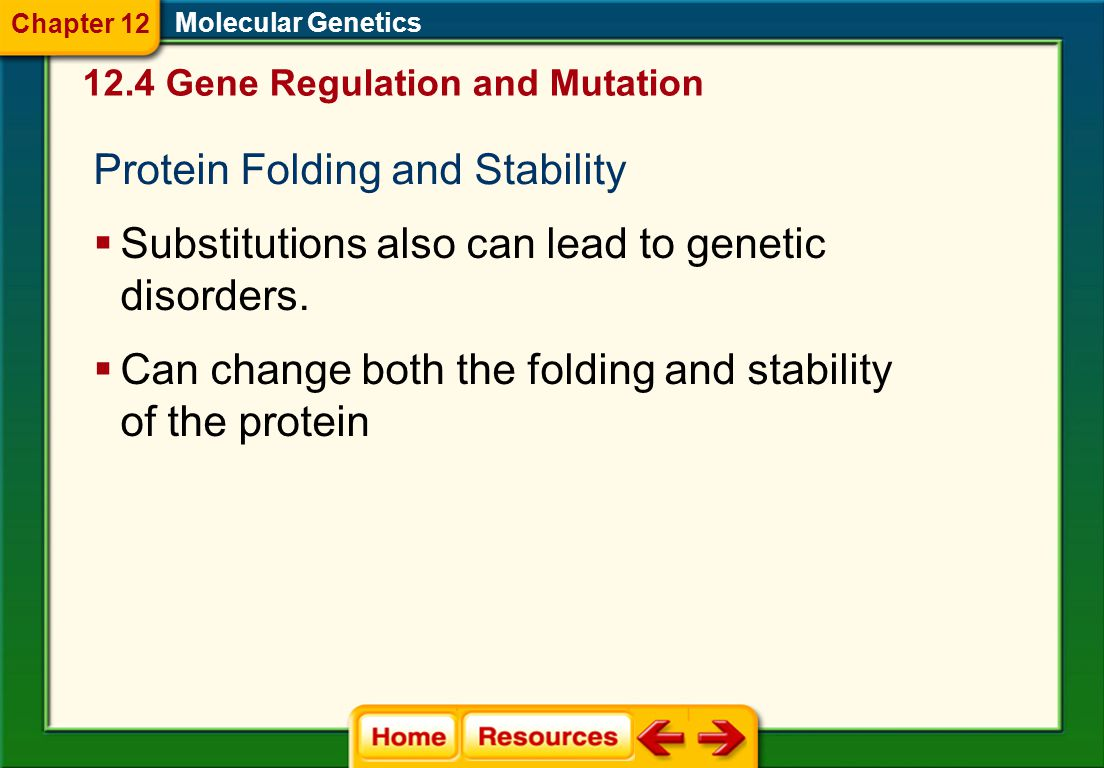 Protein Folding and Stability