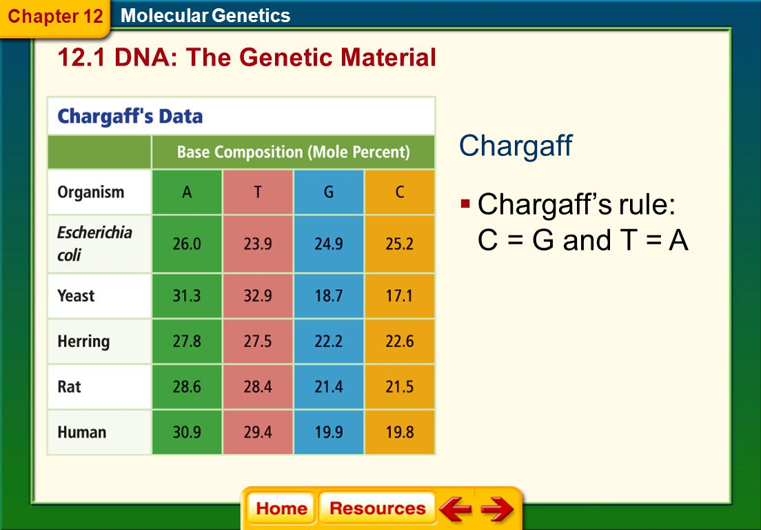 Chargaff's rule: C = G and T = A