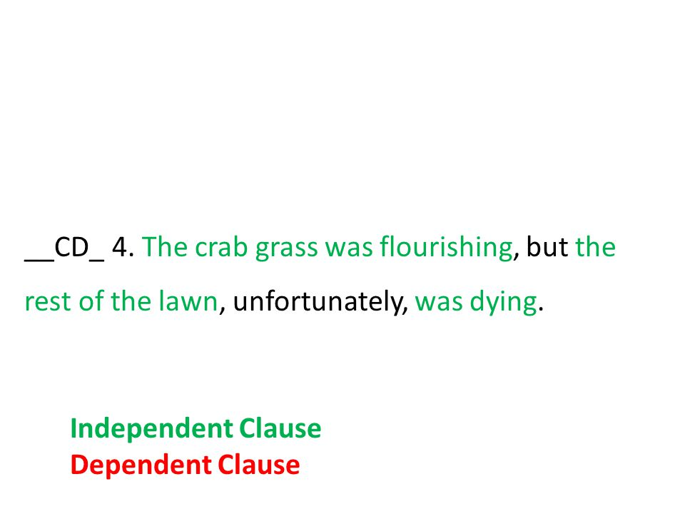 __CD_ 4. The crab grass was flourishing, but the rest of the lawn, unfortunately, was dying.