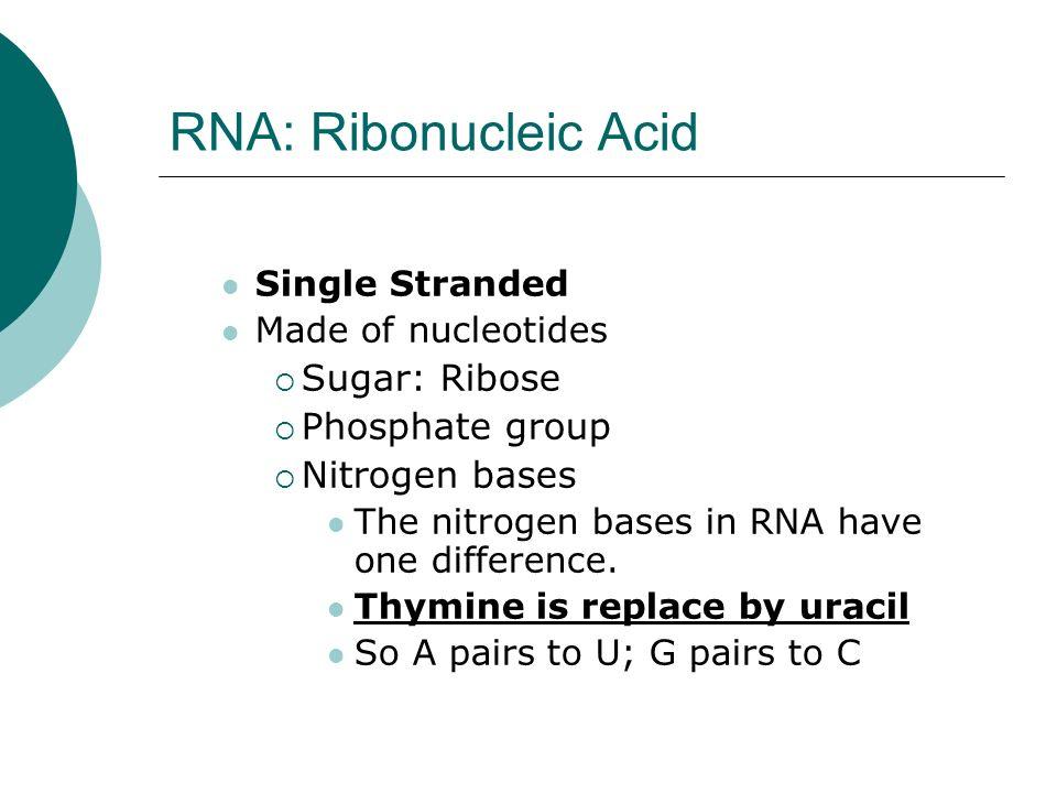 RNA: Ribonucleic Acid Sugar: Ribose Phosphate group Nitrogen bases