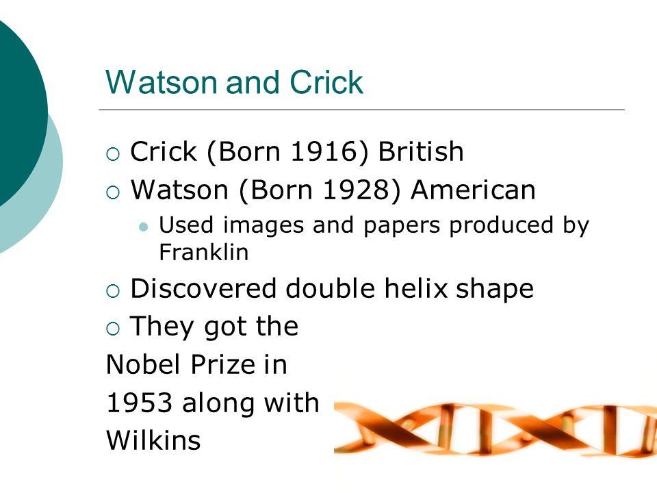 Watson and Crick Crick (Born 1916) British Watson (Born 1928) American