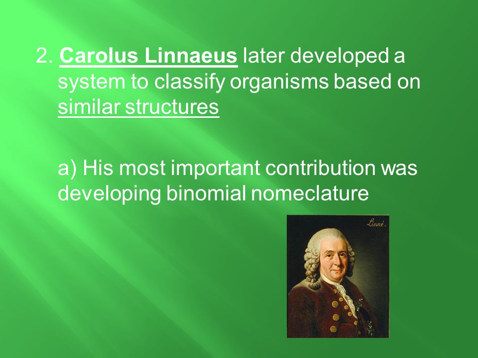 2. Carolus Linnaeus later developed a system to classify organisms based on similar structures a) His most important contribution was developing binomial nomeclature