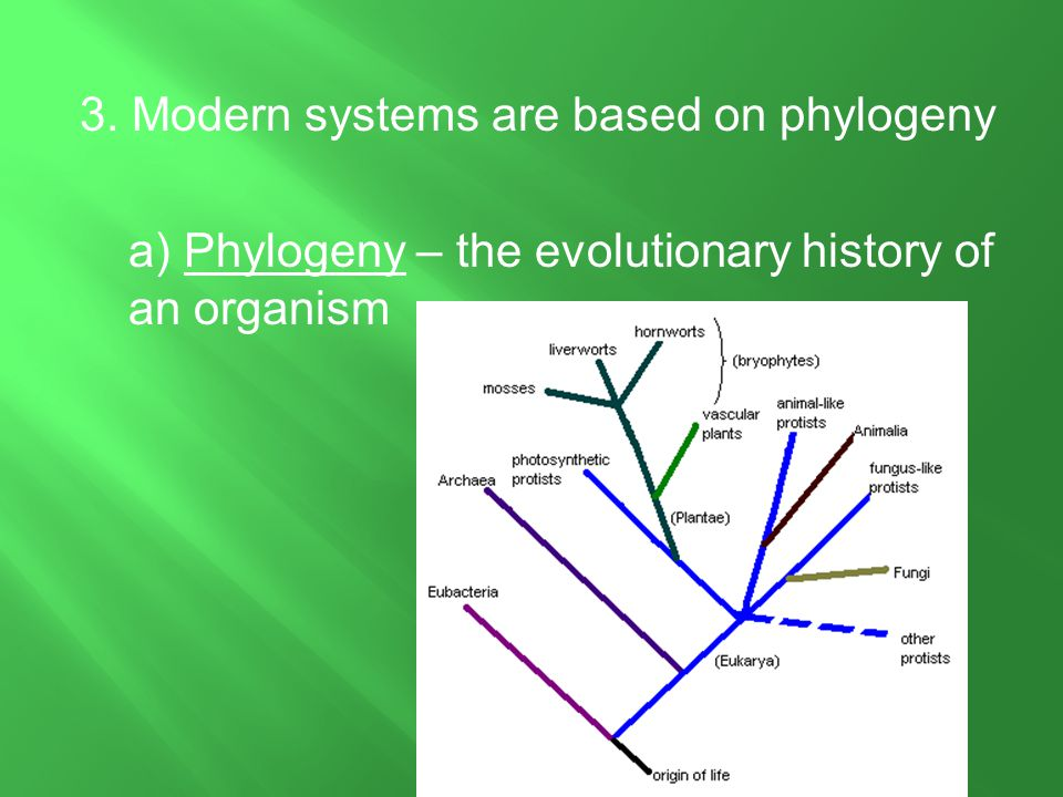 3. Modern systems are based on phylogeny a) Phylogeny – the evolutionary history of an organism